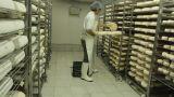 Blue cheese gouda Factory food process parmesan swiss dairy feta france milk Footage