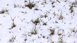 Jerusalem snow 2012 12 Stock Video Footage