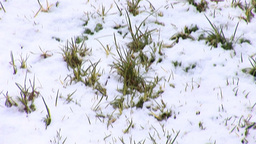 Jerusalem snow 2012 12 Footage