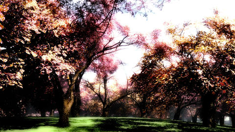 Japanese Garden 06 Stock Video Footage