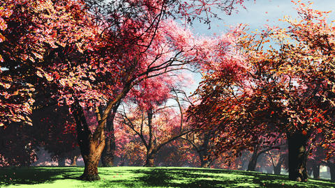Japanese Garden 08 falling petals Stock Video Footage