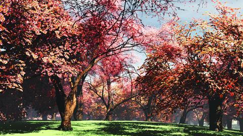 Sakura Cherry Blossom Petals 2