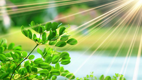 green leaves and sunrays close-up Footage