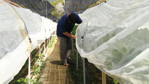 working in the hydroponics farm checking spray nozzles Footage