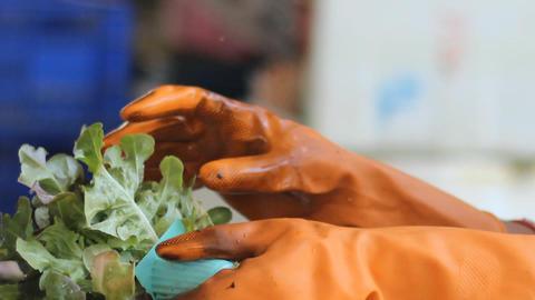 working in the hydroponics farm Footage