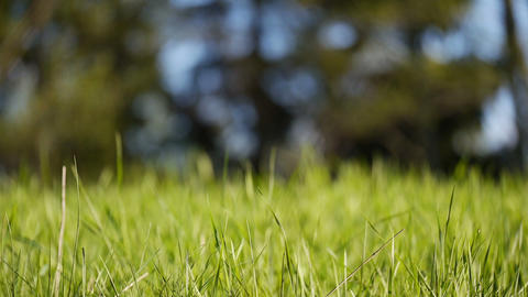 Generic lush meadow, grass swaying in wind, selective focus ライブ動画