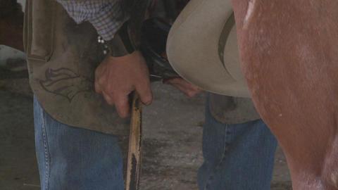 Cowboy rancher shoeing horse Live Action