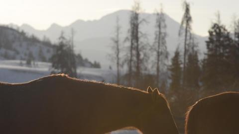 Horse Steams In Winter- Colorado Ranch In Rockies stock footage