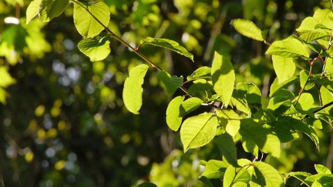 juicy green leafs swaying in soft breeze Footage