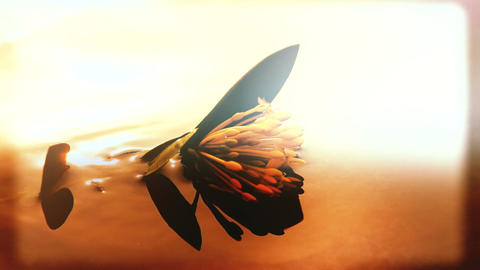Flower Floating on a Quiet Pond at Sunset
