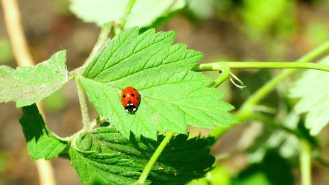 Ladybug Footage