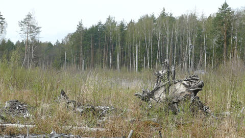 forestry wood monster in Russia in the spring forest glade Footage
