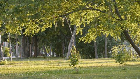 Park Tree Leaves 01 stock footage