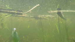 Pond Underwater Dolly Scene stock footage