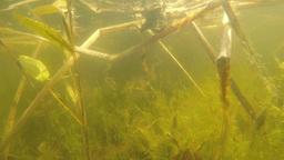 pond underwater dolly scene Footage