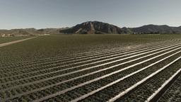 Strawberry Fields stock footage