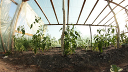 inside greenhouse dolly Footage