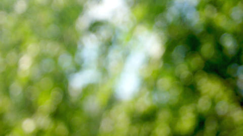 The leaves of trees in blur Footage