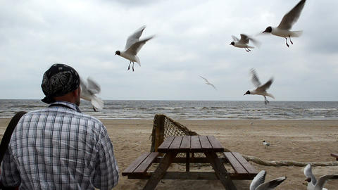 Man Headscarf On Head Feed Fly Seagull Gull Bird Background Sea stock footage