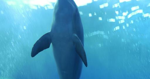 dolphin underwater 01 Live Action