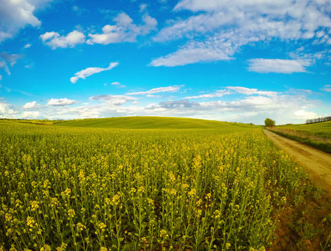 Clouds over the Rapeseed Fields. Time Lapse 4K Footage