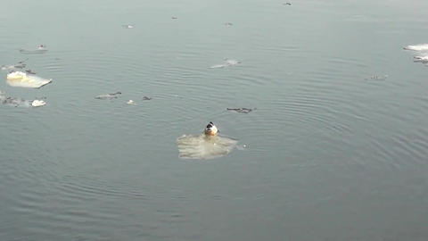 Floating Among The Ice On The River Duck stock footage