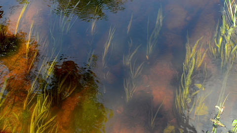 river stream water flow underwater flora fishes reflection, Live Action