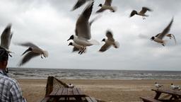 photographer man shoot take photo of fly seagull gull bird Footage