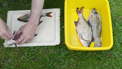 man hands salting freshly caught bream tench roach fish Footage