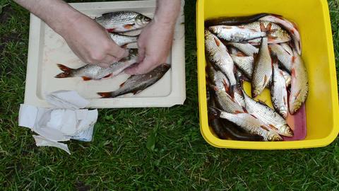 Man Hands Salt Fresh Caught Raw Roach Fish stock footage