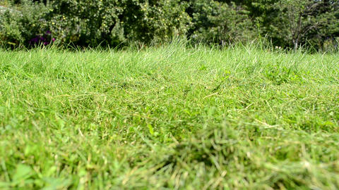 meadow grass closeup lawn cutter mower worker pass Footage