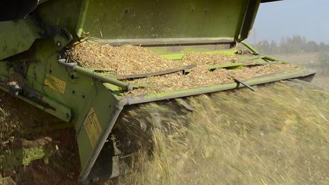 walk closeup combine harvest wheat agriculture field Footage