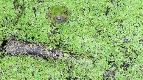 green frog predator swamp catch prey earthworm worm Live Action