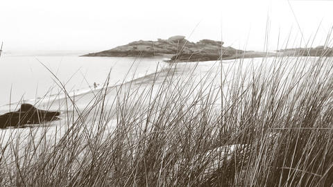 A young woman seen through high herbs on a dune is walking along the seashore Footage