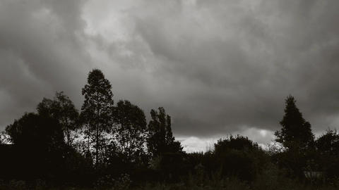Timelapse with thick clouds over various trees and a meadow, black + white Live Action