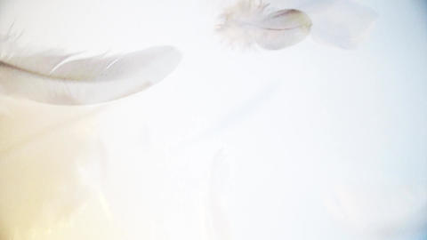 White, clear and light feathers floating softly in the air in a soft light Footage