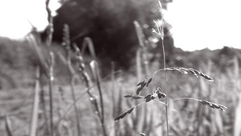 Man Pushing A Lawn Mower, Close Up On Grass In Foreground - B+W - Short Cut stock footage