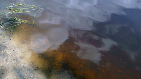 Water Peat In The Lake In The Summer In Russia UHD stock footage
