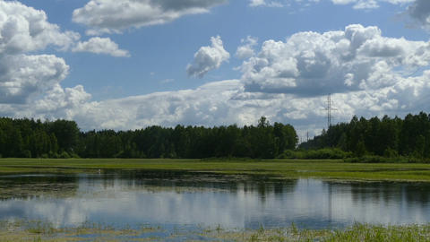 Lake wetland in the countryside with green algae in the summer of 2015 Russia Footage