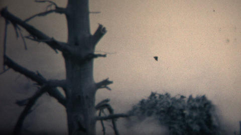 (8mm Vintage) 1967 Black Cauldron Geyser in Yellowstone Park Footage