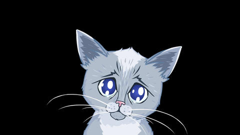 Kitten with Tearful Eyes (with Alpha Channel) Animation