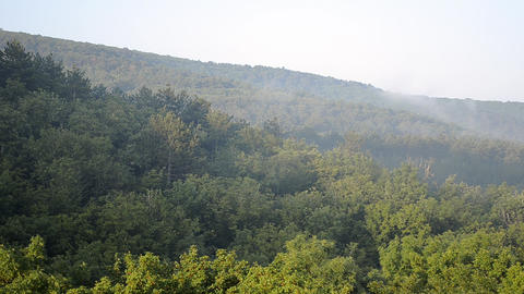Morning Fog Rising From Forest Footage