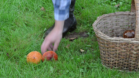 man hand take orange red cap boletus mushrooms basket grass Footage