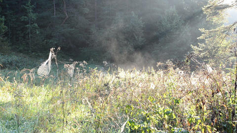 meadow lot spiderweb spider web grass fog vapour evaporate Footage