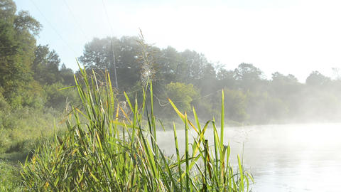 spider web on misty fogy river shore flora Footage