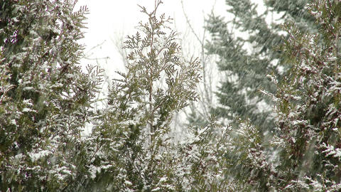 4K Blizzard In A Winter Forest 4 stock footage