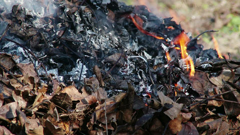 4K Burning Leaves and Garden Waste in Late Autumn 3 closeup Animation