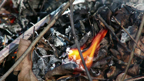 4K Burning Leaves and Garden Waste in Late Autumn 5 closeup Animation