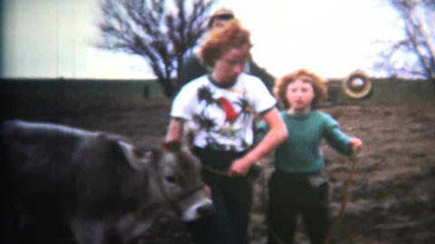 (8mm Vintage) 1952 Napoleon Dynamite Type Owned By Cows. Iowa, USA Footage