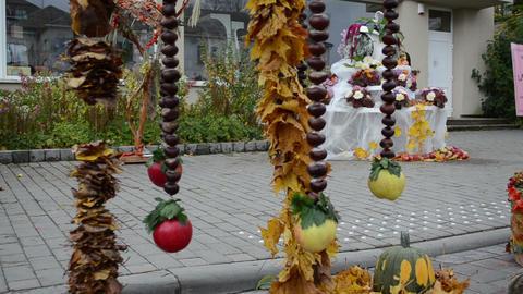 decoration autumn leaf conker fruit apple move harvest festival Footage